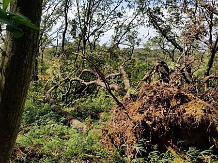 2019.9.23BOSS鎌倉ハイキングコース台風一過5.jpg