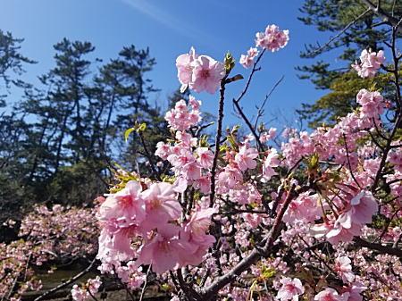 2020.2.17春/下藤が谷公園.jpg