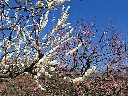 2020.2.17春/新林公園.jpg