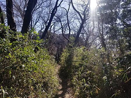 2020.2.17春/鎌倉中央公園1.jpg