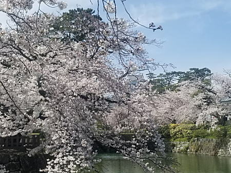 2021.3.29小田原城2.jpg