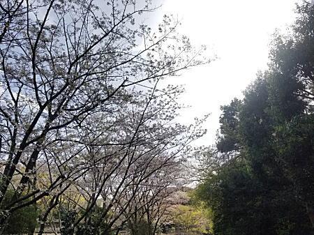 2021.3.29新林公園.jpg