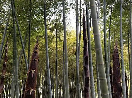 竹やぶ.jpg